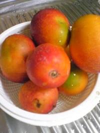 Mango_3